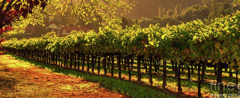best winery tour melbourne